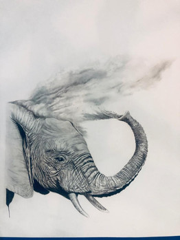 elephant in the dust
