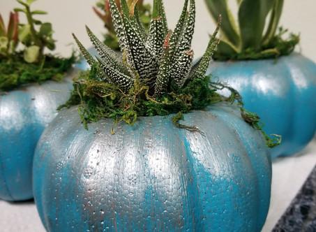 Fall Succulent Planter DIY