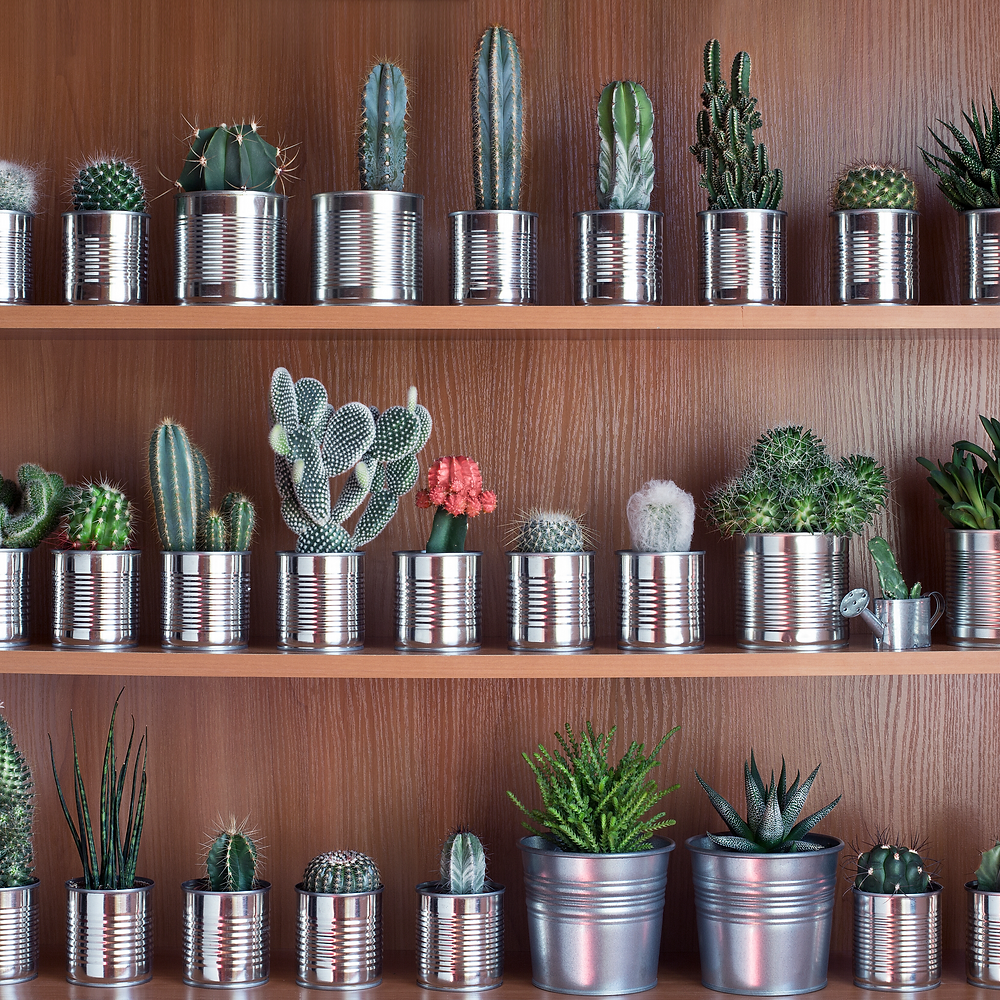 Succulents in Tin Cans and Buckets