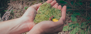 Heart Shaped Moss