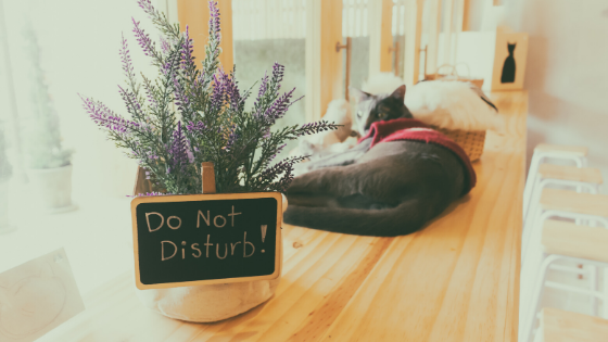 Do Not Disturb Sign and Cat