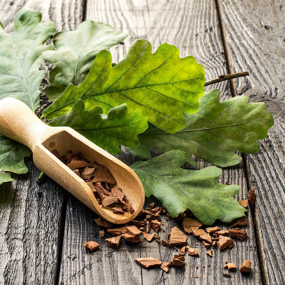 Oak Bark and Leaves