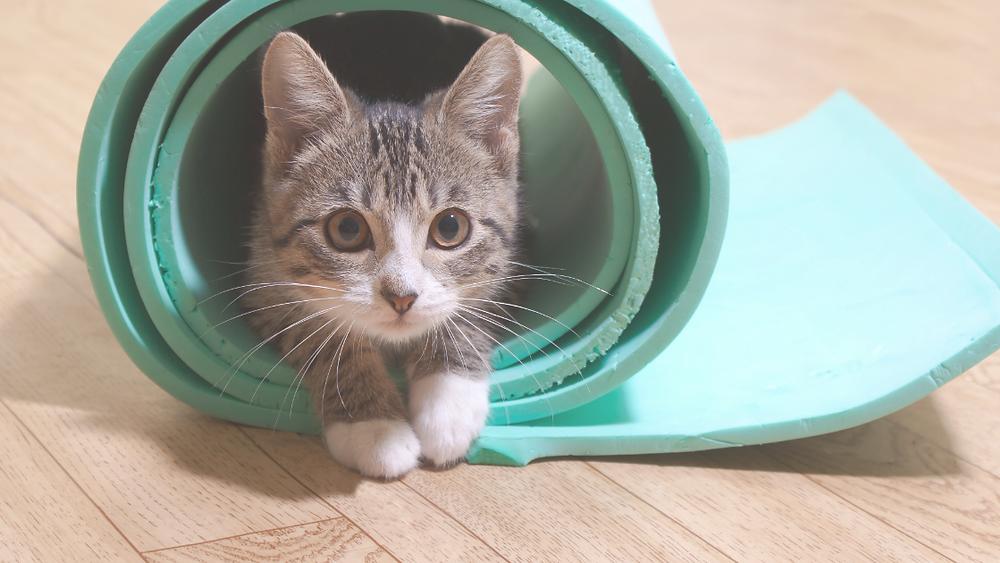 Kitten in A Yoga Mat