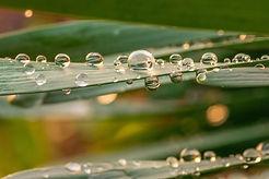 Droplets 1-1363.jpg