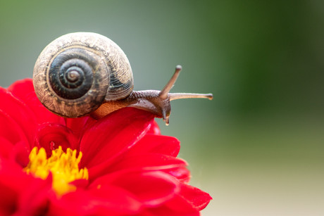 Snail's Pace (N-020)