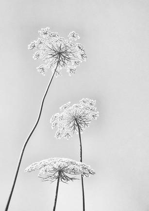 Summer's Snowflakes (Q-007)