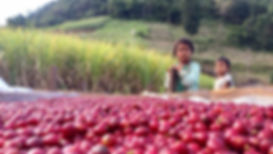 Foreword Coffee sourcing its coffee beans from the Asian region