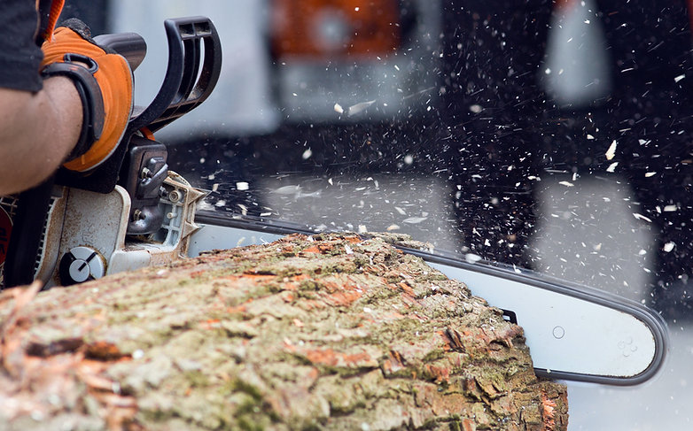 Logger cutting wood with chainsaw