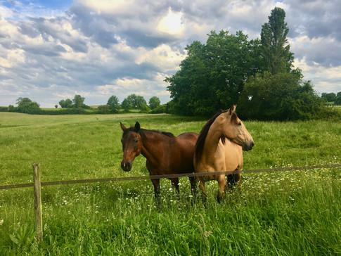 Petit Clos horses