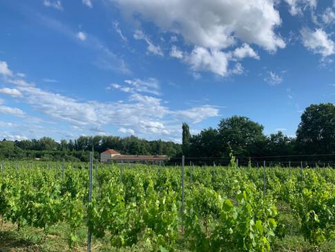 Petit Clos Berticot vineyard wine