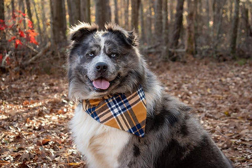 Yellow Plaid Bandana or Bowtie