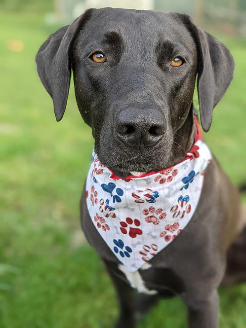 4th of July paw prints bandana or bow tie