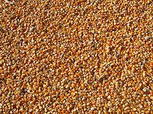 Maiskonserven: Beste Qualität aus der Türkei