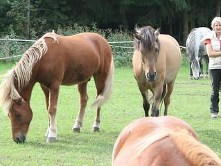 Die Ausbildung zum Pferdegestützten Coach