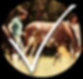 Pferdeunterstütztes Coaching Schweiz