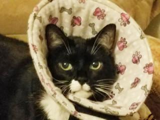 The Best Cat Cone