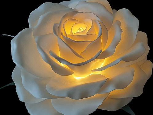 Белая королевская роза