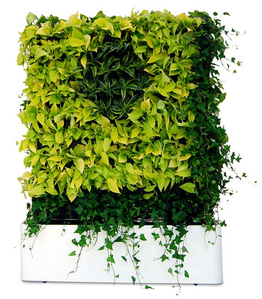 MOVING PHYTO HEDGE