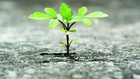 Você é uma pessoa resiliente?