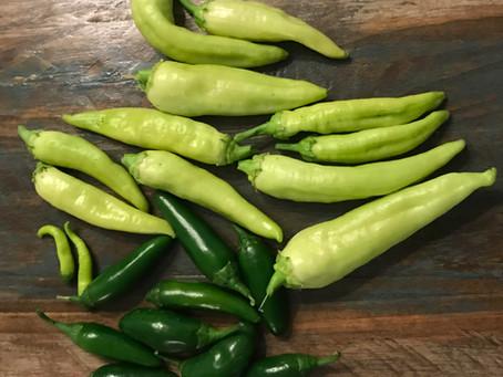 Growing Peppers in Arizona Gardens