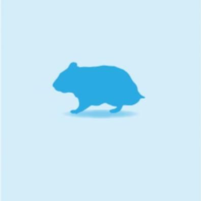 Hamster, Individual
