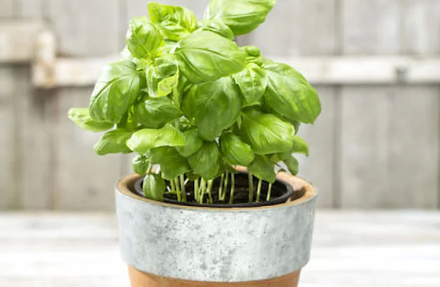 Plantas e flores que vão fazer você se sentir mais feliz em casa