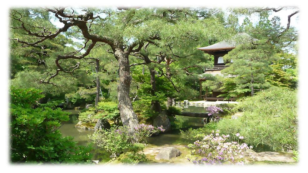 bonsai workshop wa, perth wa, bonsai perth, bonsai society wa,