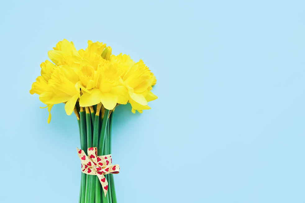 Bouquet of yellow narcissus decorated wi