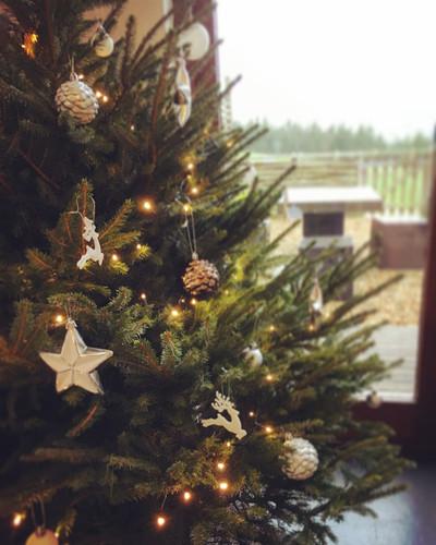eco christmas.JPG