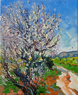 L'amandier en fleurs en Provence