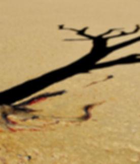 Schattenspiel im Sossusvlei, ©Helmut Schäfer - Cheetah Tours & Safaris Namibia