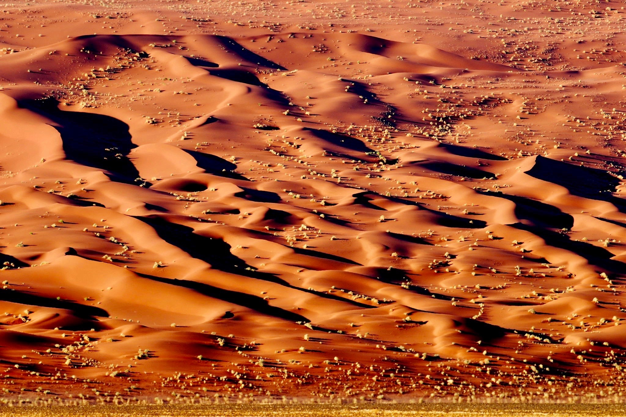 duenenmeer-namib_cheetah-tours-safaris-n