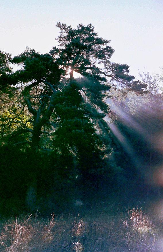 Baum_neu_72dpi.jpg