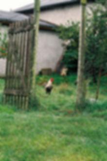 Widemgut_08.jpg