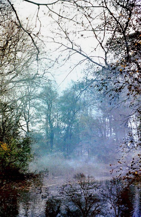 Wasserwald_neu_72di.jpg