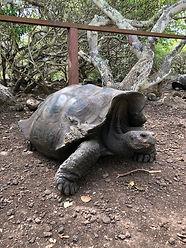 Poznávací zájezd Ekvádor, Galapágy a želvy