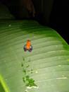 Poznávací zájezd na Kostariku sopka Arenal