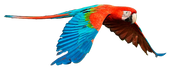 guacamaya-770x455.png