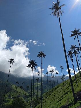 Poznávací zájezd do Kolumbie Salento