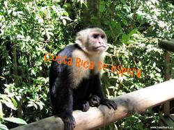 Costa Rica te espera