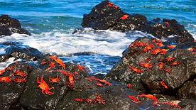 cangrejos-isla-floreana.jpg
