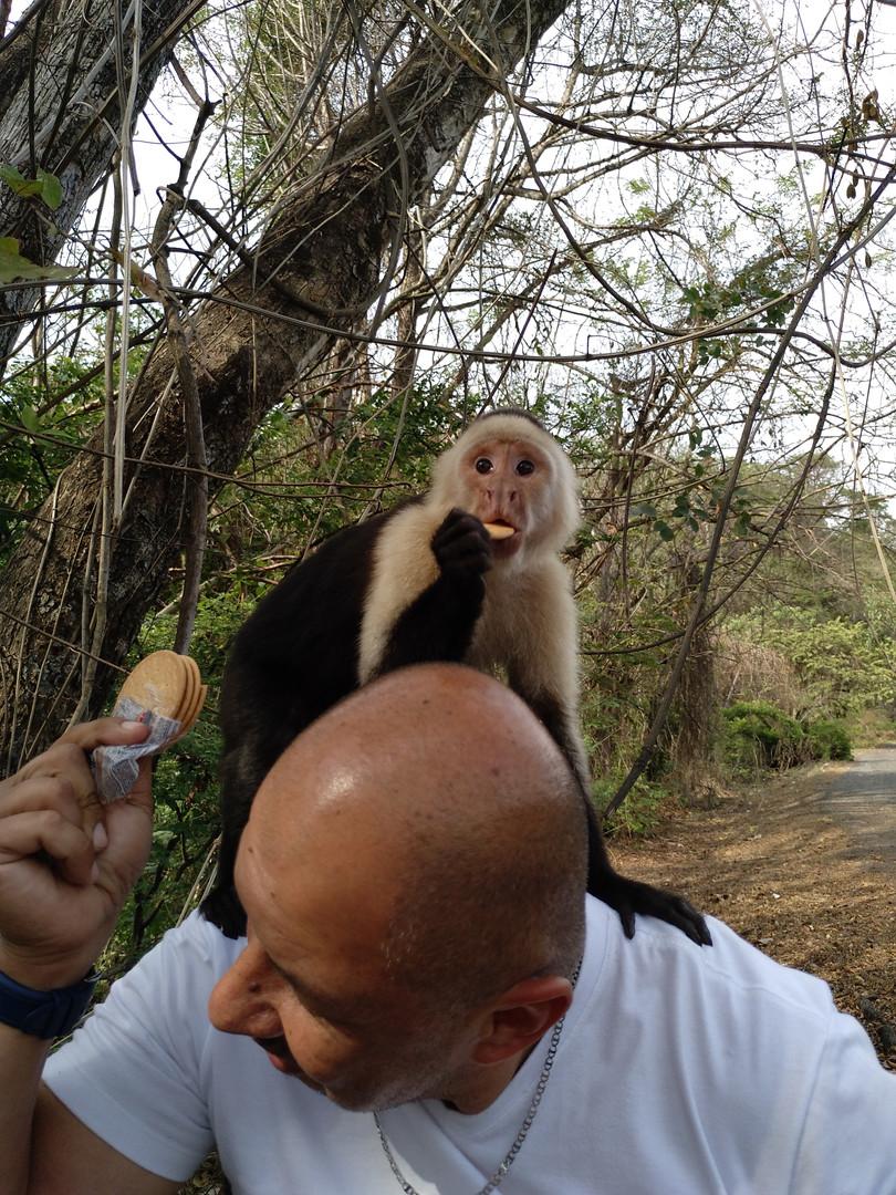 Opice kapucín