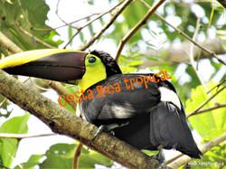 Costa Rica tropical