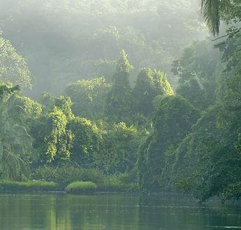rio-sirena-corcovado-national-park-costa