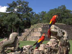 Circuito Mexico y Guatemala