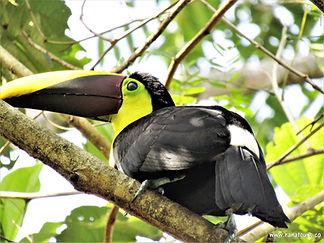 Kostarika zájezdy, zájezdy na Kostariku