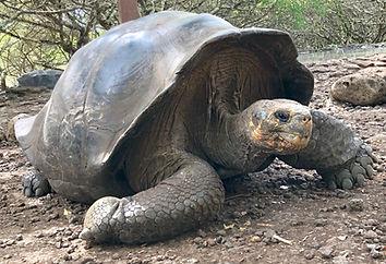 Poznávací zájezd Ekvádor a Galapágy