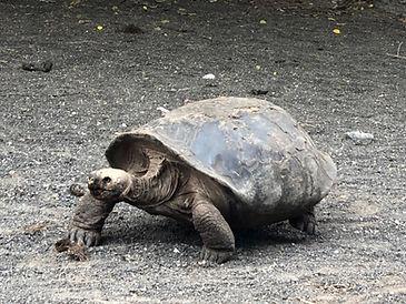 Poznávací zájezd Ekvádor, Galapágy, Amazonie a želvy sloní