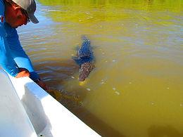 Výlet za krokodýly a plameňáky do Río Lagartos
