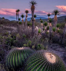 Visit-México-560x600.jpg